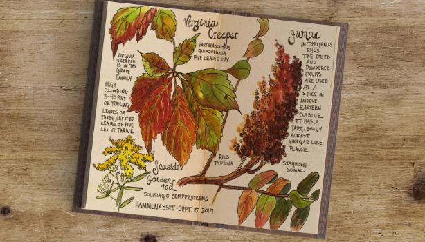 Jan Blencowe Nature Journaling