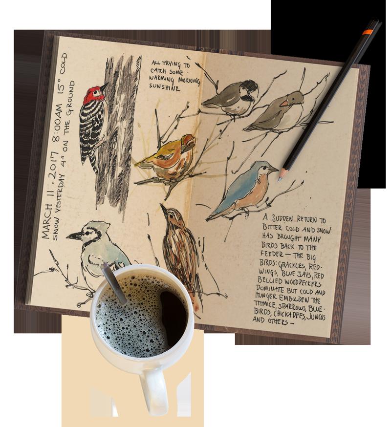 nature journal journaling jan blencowe easy ways steps self splendid habitat create right