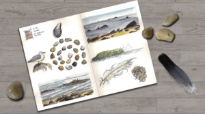 Nature journal at Beach