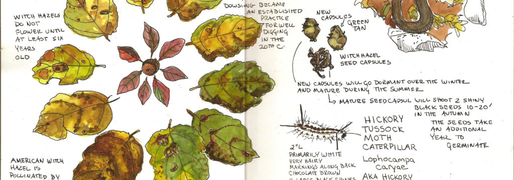 3 Easy Steps to Keeping a Nature Journal