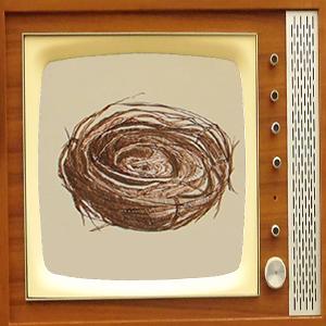 birds nest on TV