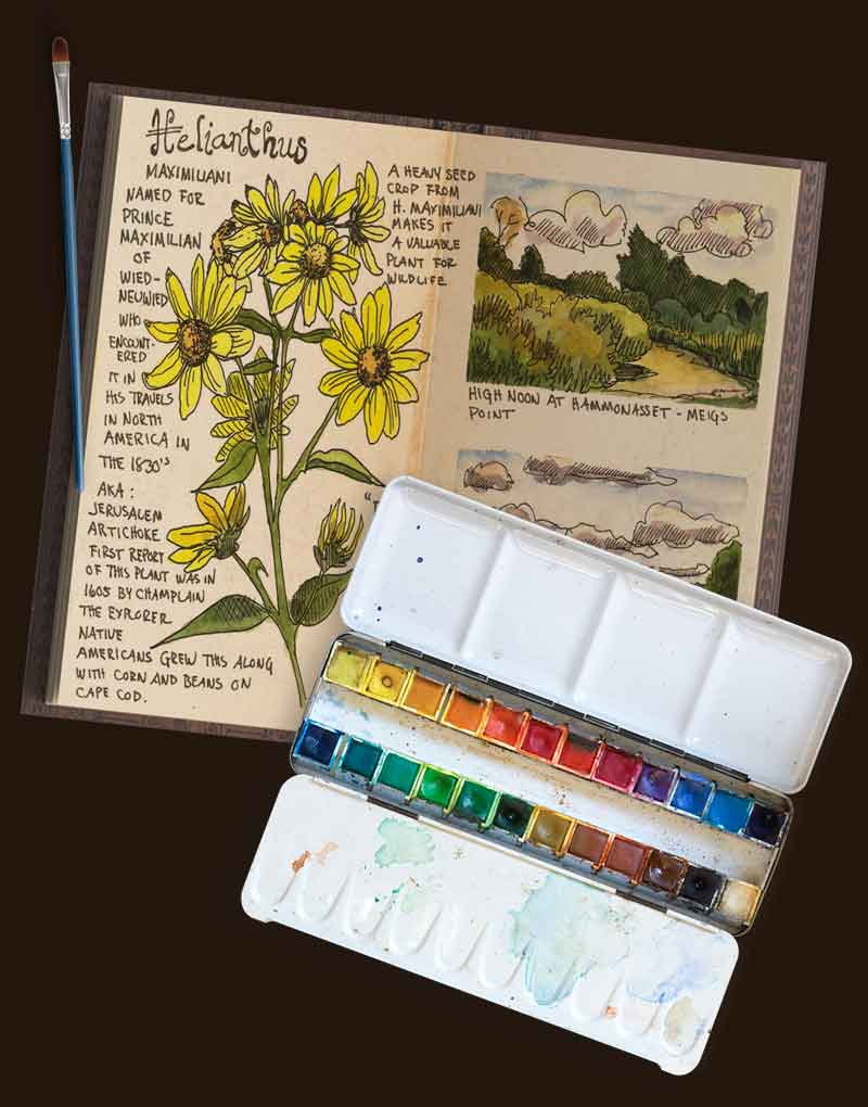 Nature-Journaling-Jan-Blencowe-5